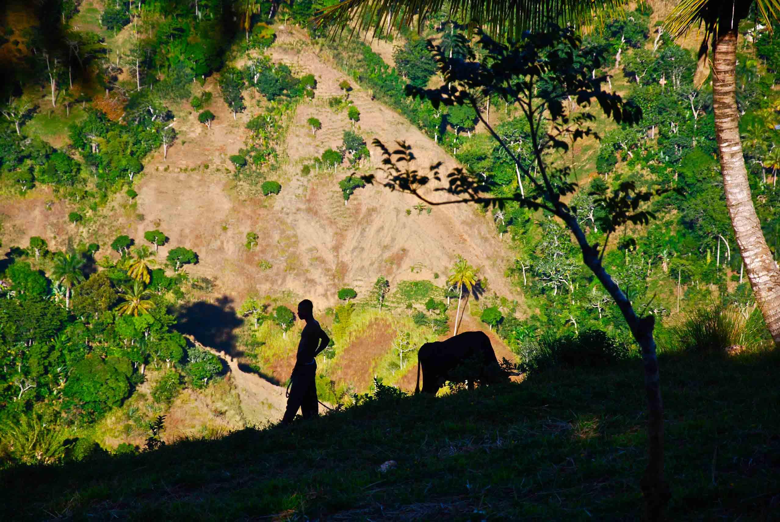Morne érodé, paysan gardant son troupeau, Haïti. E. Malézieux, © Cirad.
